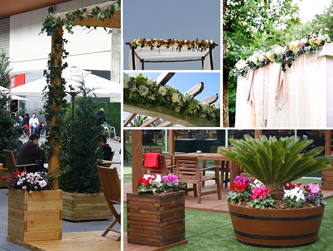Flores y plantas de temporada para decorar nuestras - Plantas para pergolas ...