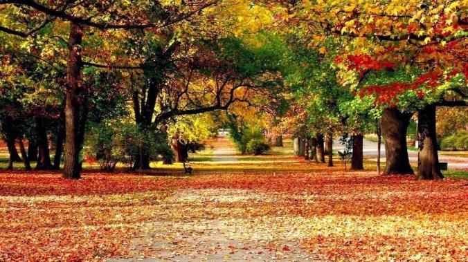 paisaje otoño